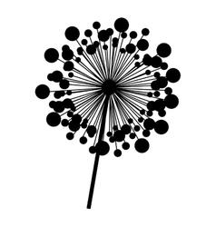 contour dandelion with stem and pistil closeup vector image vector image