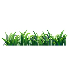 Green elongated grasses vector