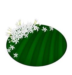 Fresh Cape Jasmine on Green Banana Leaf vector image