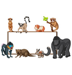 board template with wild animals vector image vector image