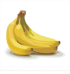 Yellow banana vector