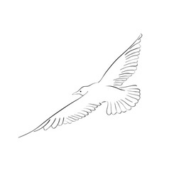 black drawing of seagull isolated on the white vector image vector image