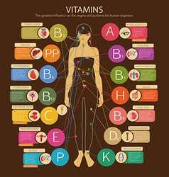 Vitamins and their impact vector image vector image