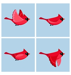 Animation cardinal flying vector image
