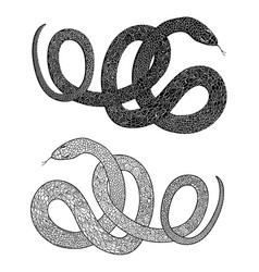 snake set engraved wildlife reptile silhouette vector image
