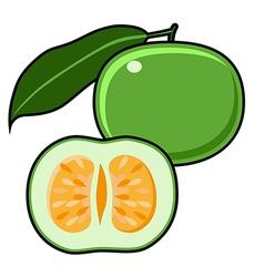 Green grapefruit jaffa sweetie vector