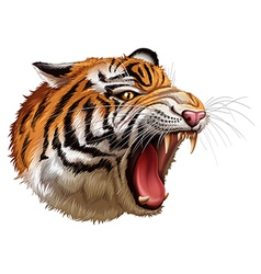 A head of a roaring tiger vector
