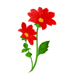 Red dahlia summer flower stem vector