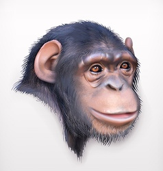 Chimpanzee head realistic vector image