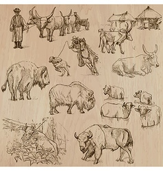 Cows and cattle - hand drawn pack vector