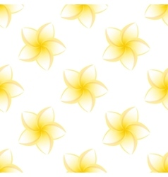 seamless plumeria isolated vector image