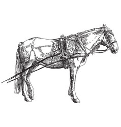 horse hand drawing vector image