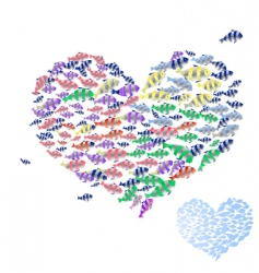valentine from marine fish vector image