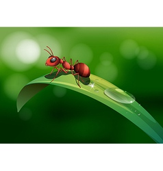 An ant above the leaf vector
