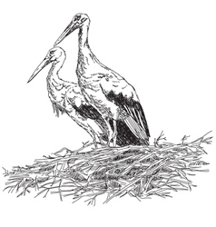 Storks couple in the nest vector