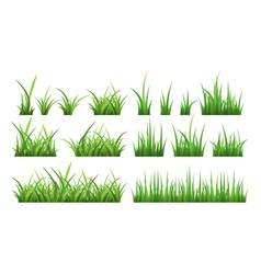 Nature of green field grass vector