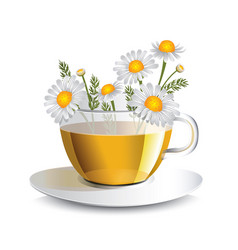 Chamomile herbal tea in a transparent cup vector