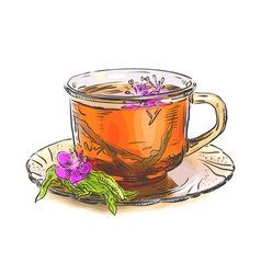 Tea with rosebay willowherb in glass sketch with w vector
