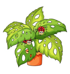 A plant with ladybugs vector image vector image