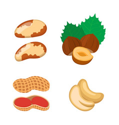nuts set vegetarian food hazelnut cashew peanut vector image