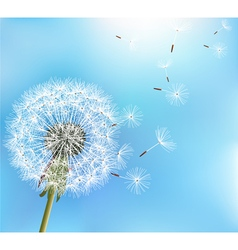 Flower dandelion on blue background vector image