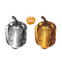 Hand drawn sweet peppers vector