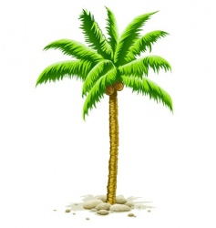Palm tree with coconut fruits vector