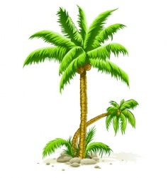 Palm trees with coconut fruits vector