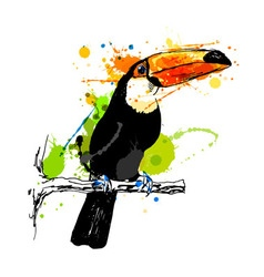 Colored hand sketch toucan vector