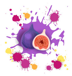 fig fruit logo watercolor splash design fresh vector image