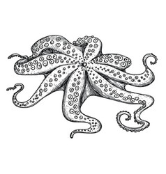 Fresh octopus hand drawn isolated icon vector