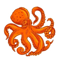 image or logo octopus on white background vector image
