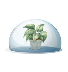 A plant inside a transparent dome vector