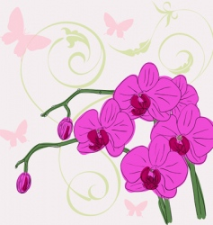 Twig blossoming orchids vector