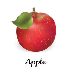 apple red isolated apple vector image