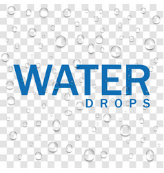 pure clear water drops realistic set isolated vector image vector image