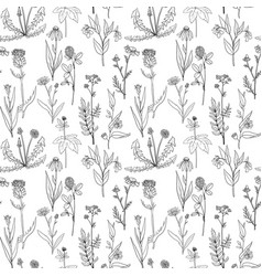 Seamless pattern with medical plants vector