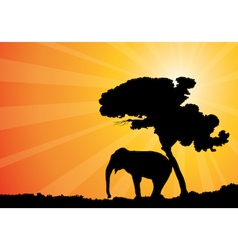 African sunshine vector image
