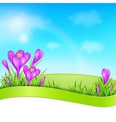 Spring background with violet crocus vector image
