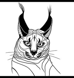 Cat caracal kitten wild animal sketch tattoo vector image vector image