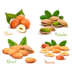 ripe nuts collection vector image