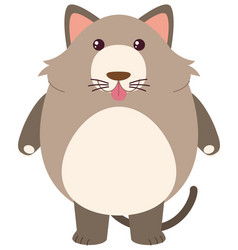 cute cat on white background vector image vector image