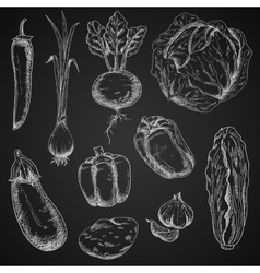 Fresh vegetables chalk sketches set vector