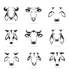 Set of cow head vector image