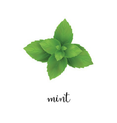 mint vector image