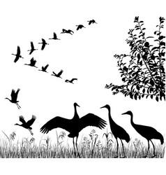 flock of cranes vector image vector image