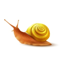 Snail realistic isolated vector image vector image