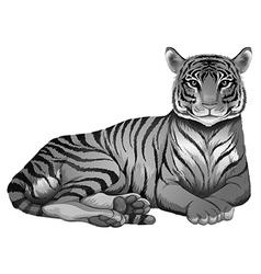 A grey tiger vector