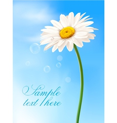 beautiful daisy card vector image vector image