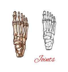 Sketch icon of human foot bones or joints vector